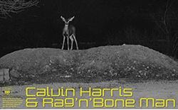 calvin harris rag n bone man giant